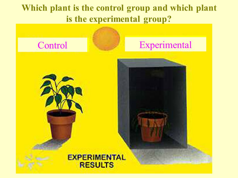 Which plant is the control group and which plant is the experimental group