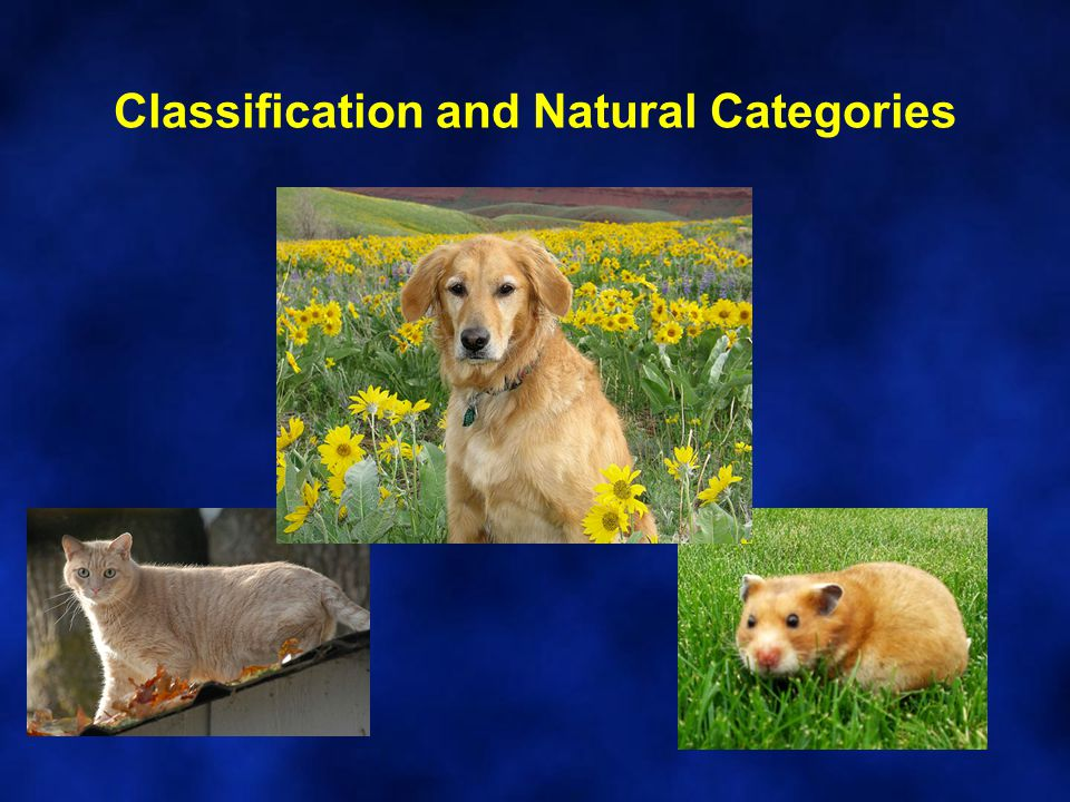 Classification and Natural Categories