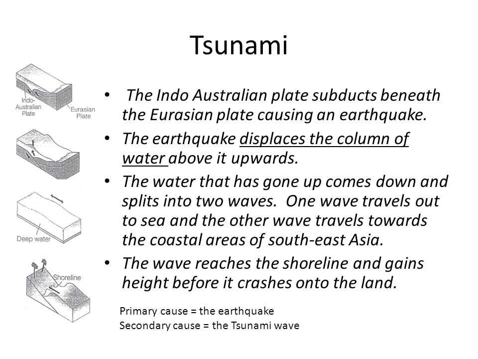 Tsunami The Indo Australian plate subducts beneath the Eurasian plate causing an earthquake.