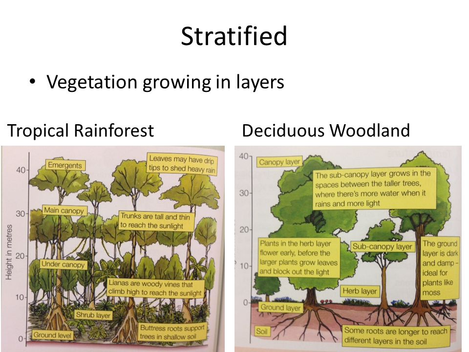 Stratified Vegetation growing in layers