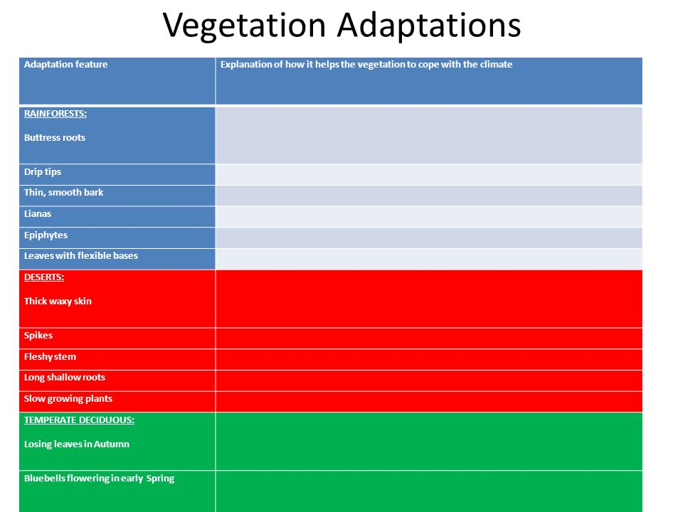 Vegetation Adaptations