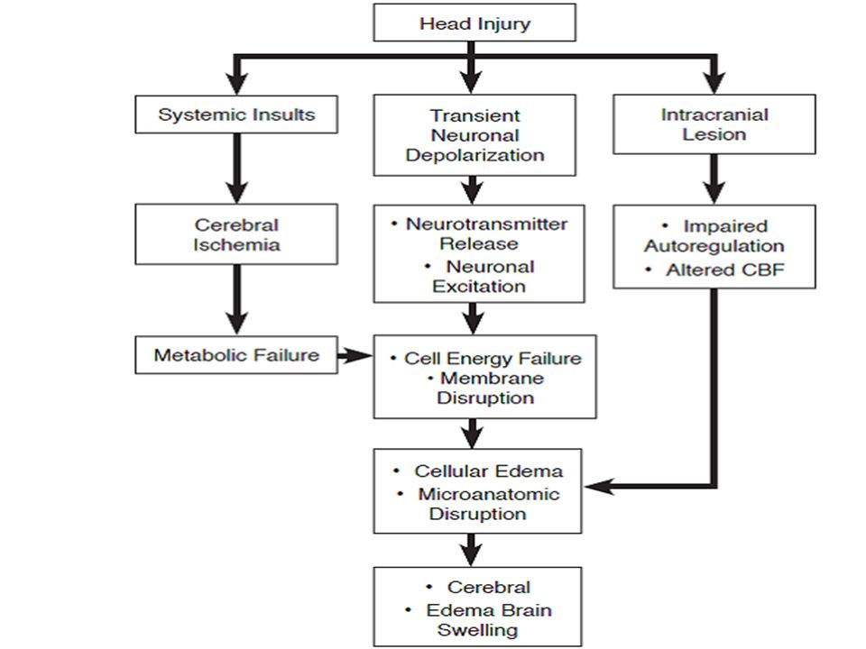 Contributing Events In The Pathophysiology Of Secondary Brain Injury