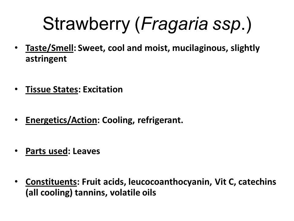 Strawberry (Fragaria ssp.)