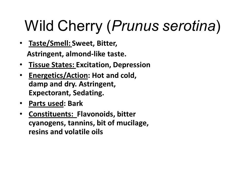 Wild Cherry (Prunus serotina)
