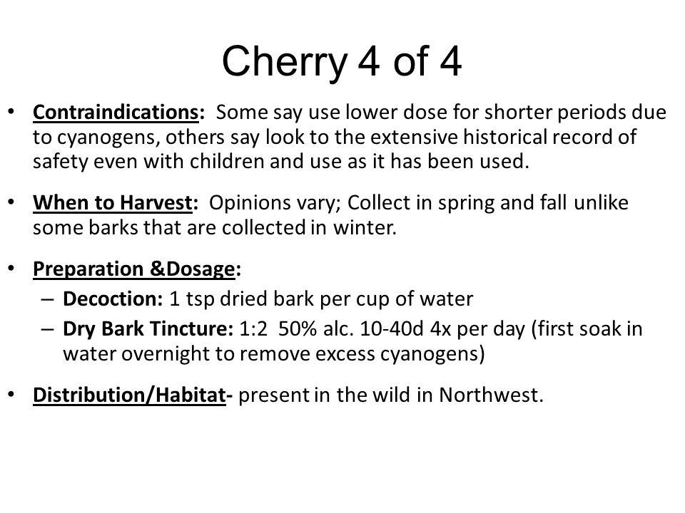 Cherry 4 of 4