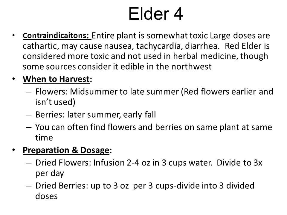 Elder 4