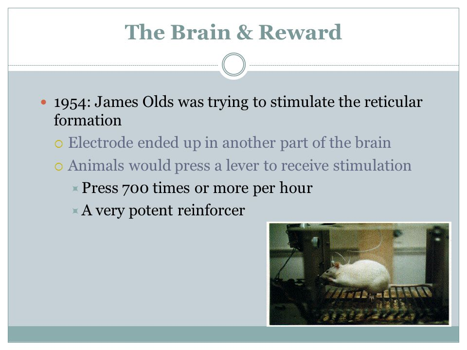 The Brain & Reward 1954: James Olds was trying to stimulate the reticular formation. Electrode ended up in another part of the brain.