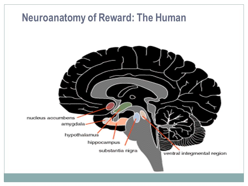 Neuroanatomy of Reward: The Human