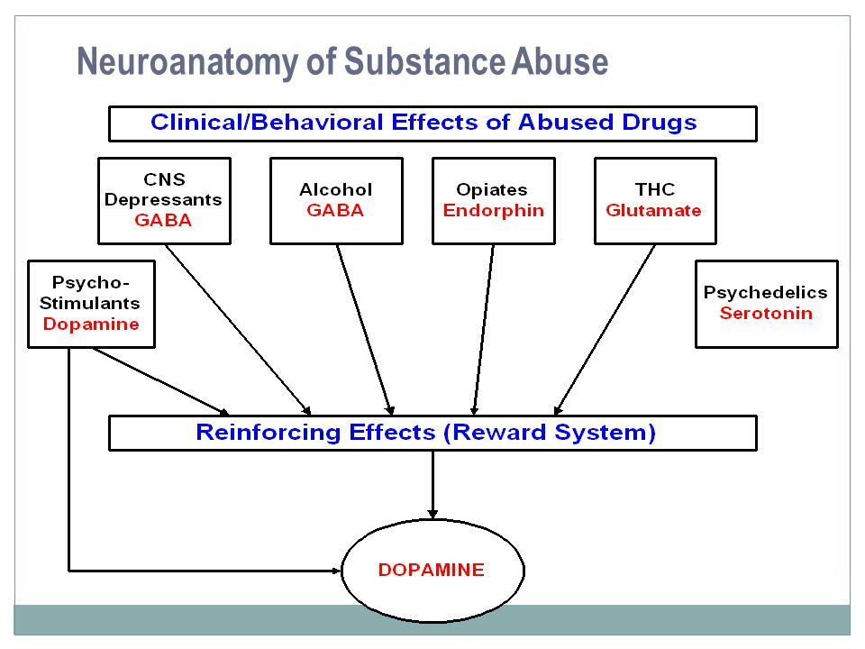 Neuroanatomy of Substance Abuse