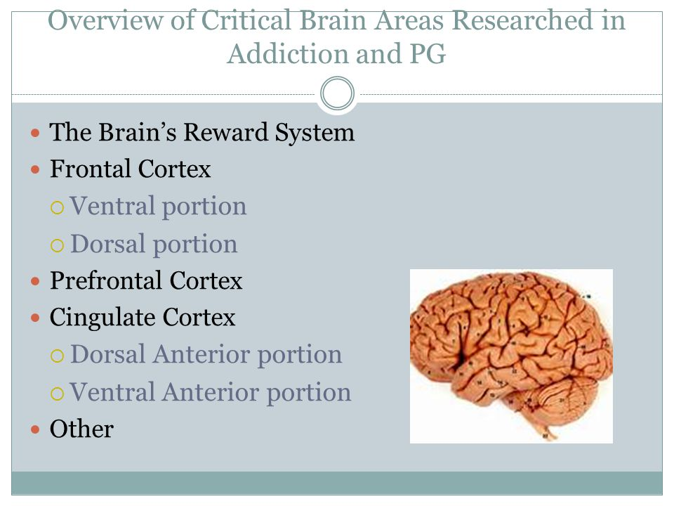 Overview of Critical Brain Areas Researched in Addiction and PG