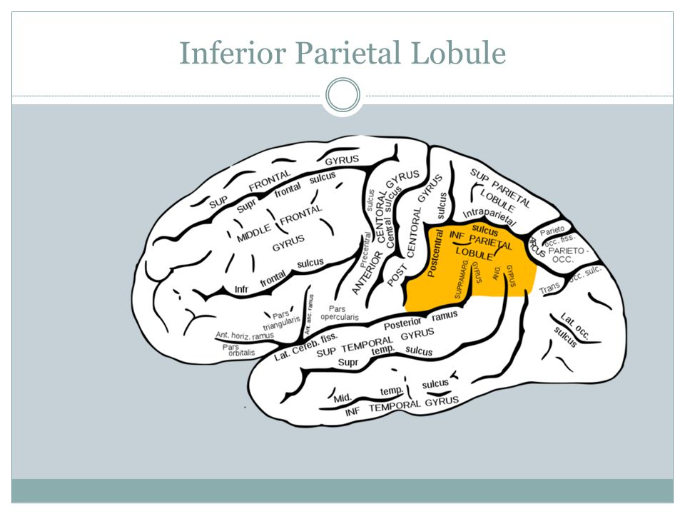 Inferior Parietal Lobule