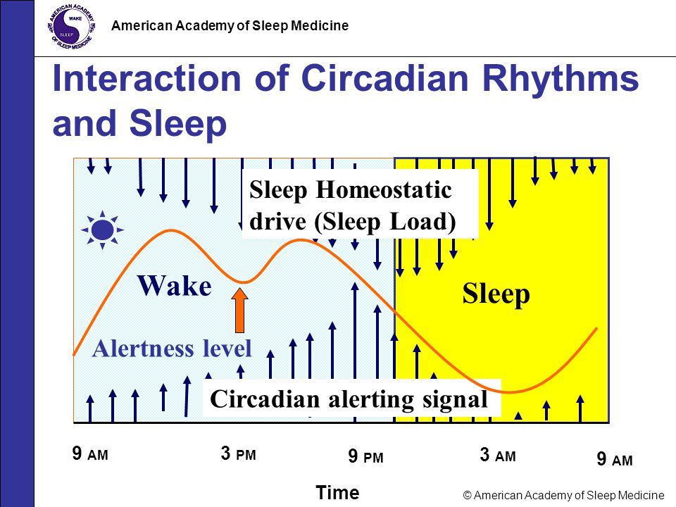 Interaction of Circadian Rhythms and Sleep