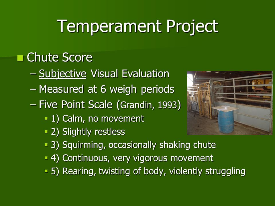 Temperament Project Chute Score Subjective Visual Evaluation