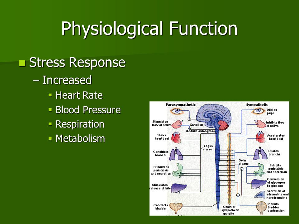 Physiological Function