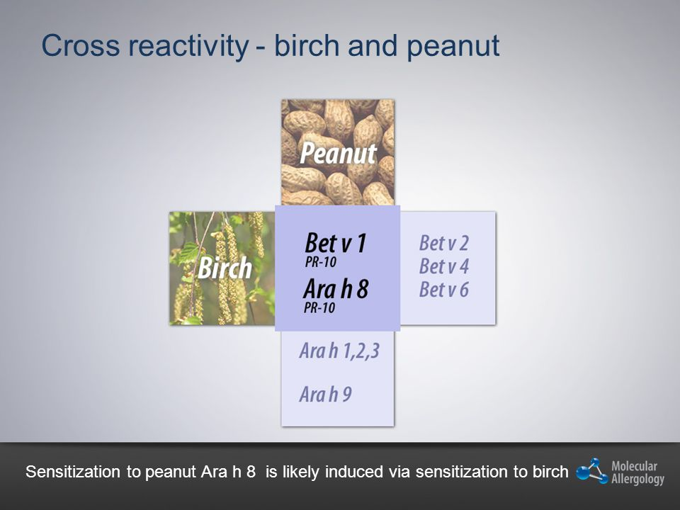 Cross reactivity - birch and peanut