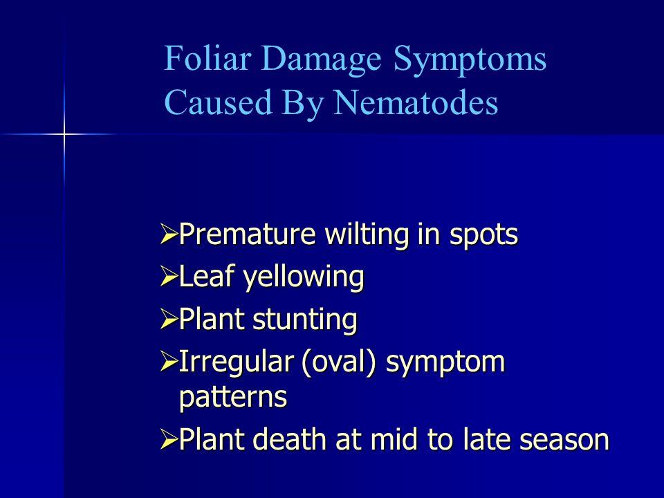 Foliar Damage Symptoms Caused By Nematodes