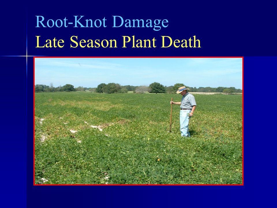 Root-Knot Damage Late Season Plant Death