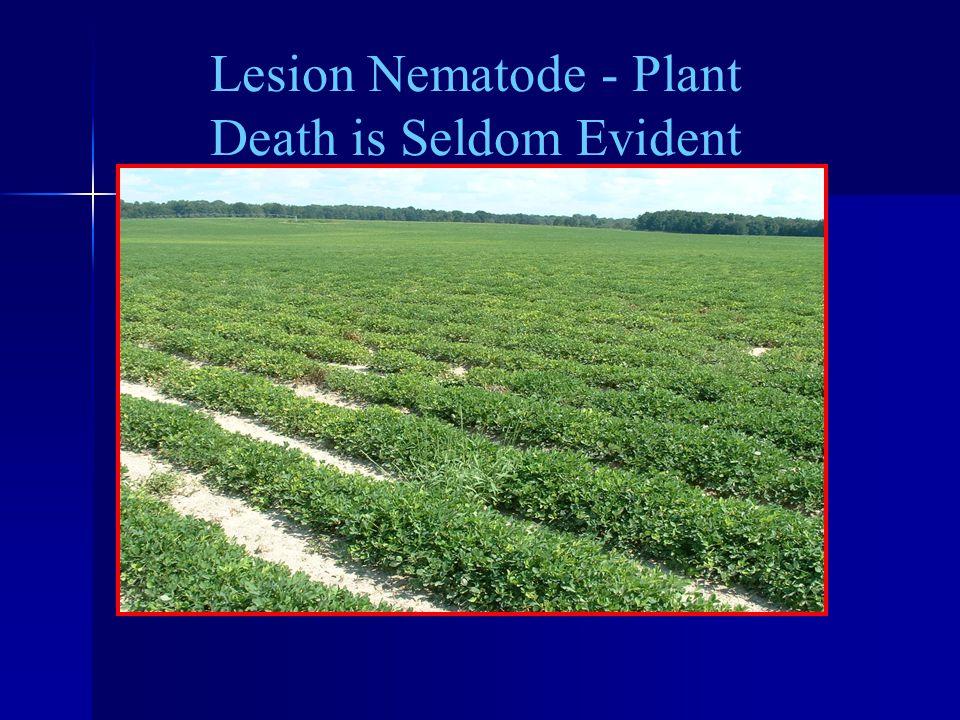 Lesion Nematode - Plant Death is Seldom Evident