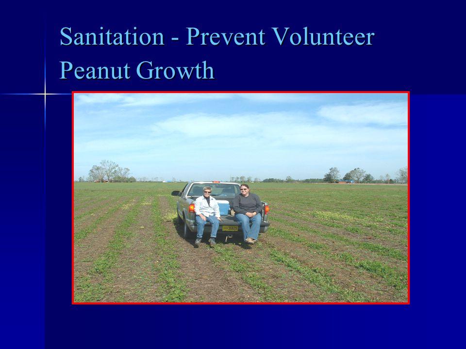 Sanitation - Prevent Volunteer Peanut Growth