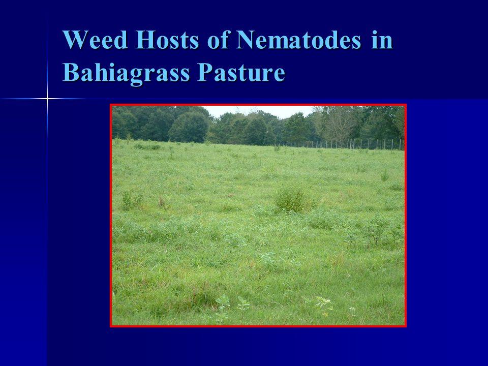 Weed Hosts of Nematodes in Bahiagrass Pasture