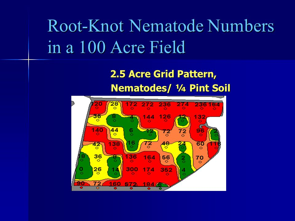 Root-Knot Nematode Numbers in a 100 Acre Field