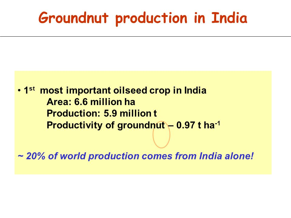 Groundnut production in India
