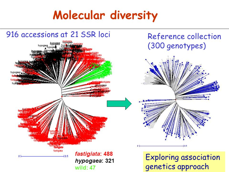 Molecular diversity 916 accessions at 21 SSR loci Reference collection