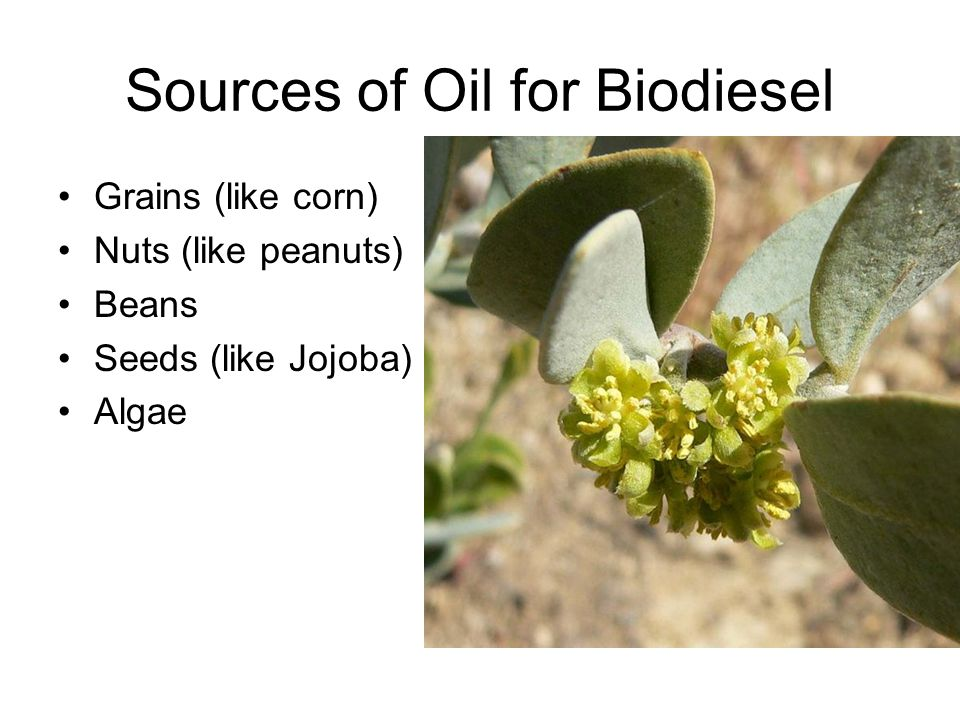 Sources of Oil for Biodiesel