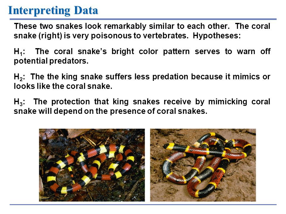 Interpreting Data These two snakes look remarkably similar to each other. The coral snake (right) is very poisonous to vertebrates. Hypotheses: