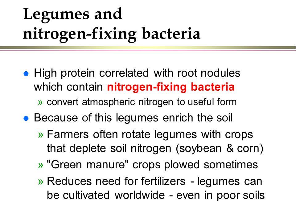 Legumes and nitrogen-fixing bacteria