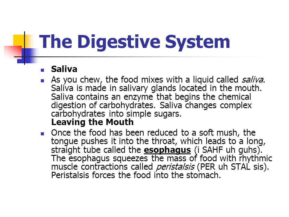 The Digestive System Saliva