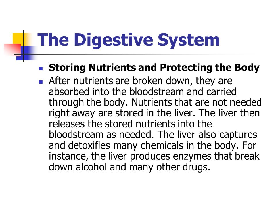 The Digestive System Storing Nutrients and Protecting the Body