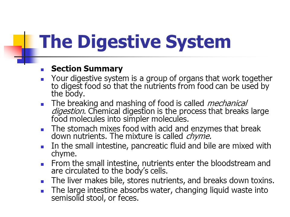 The Digestive System Section Summary