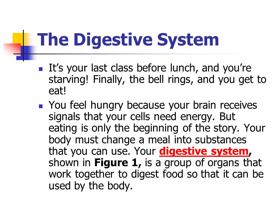 The Digestive System It's your last class before lunch, and you're starving! Finally, the bell rings, and you get to eat!