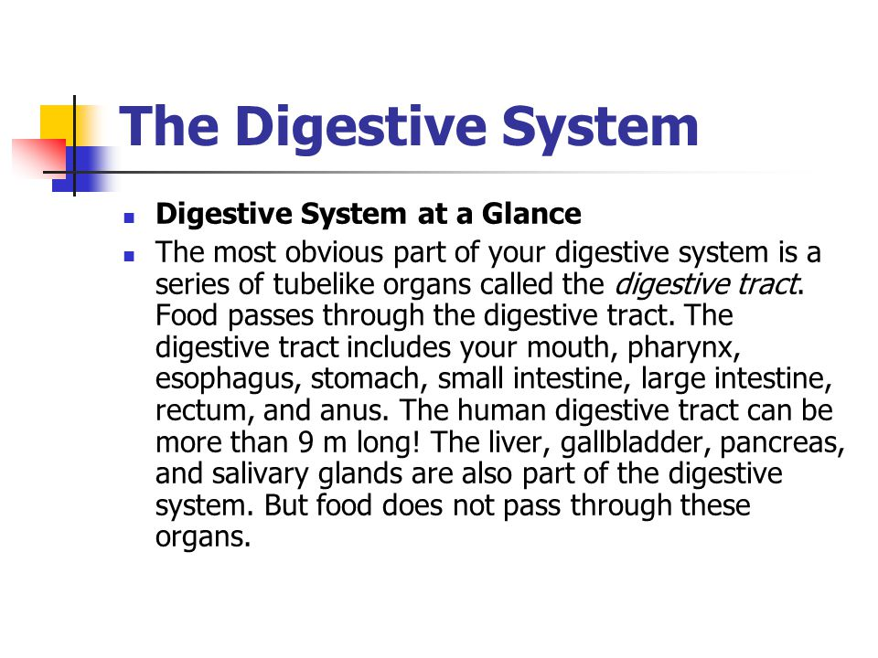 The Digestive System Digestive System at a Glance