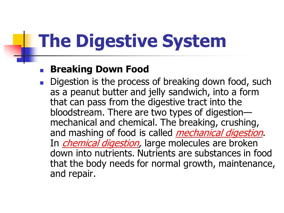 The Digestive System Breaking Down Food