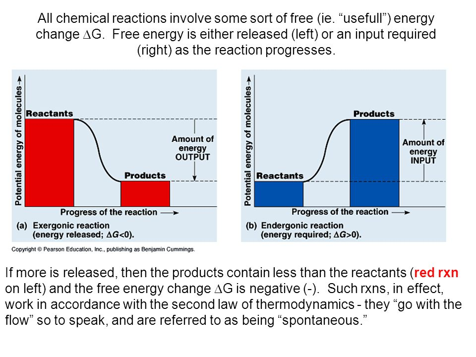 All chemical reactions involve some sort of free (ie