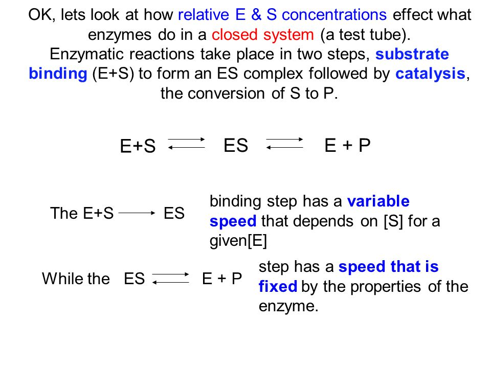 OK, lets look at how relative E & S concentrations effect what enzymes do in a closed system (a test tube). Enzymatic reactions take place in two steps, substrate binding (E+S) to form an ES complex followed by catalysis, the conversion of S to P.