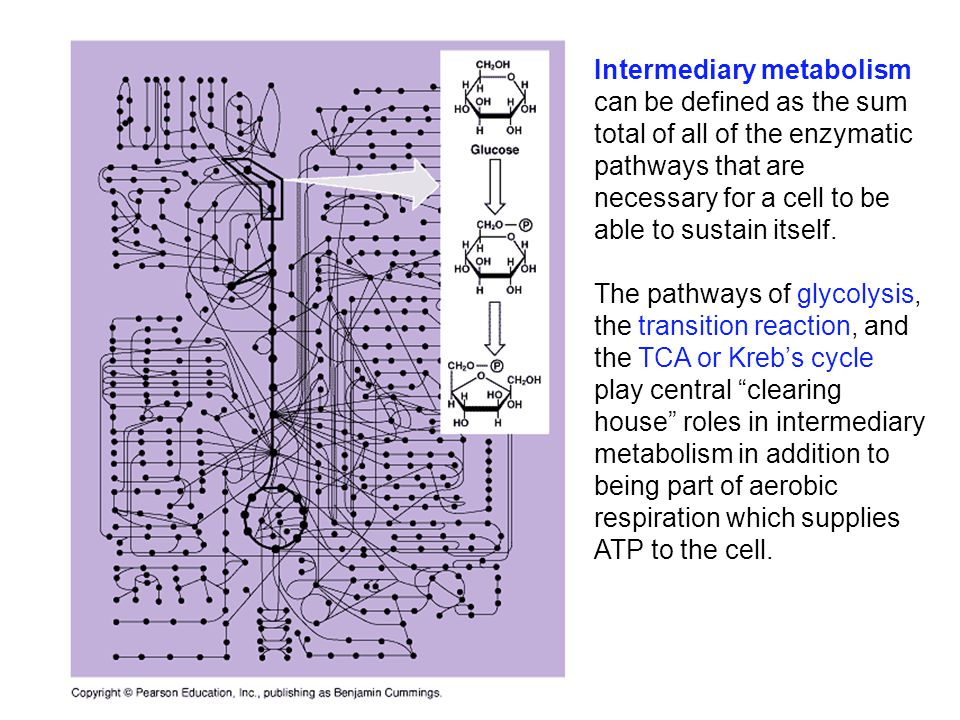 Intermediary metabolism can be defined as the sum total of all of the enzymatic pathways that are necessary for a cell to be able to sustain itself.