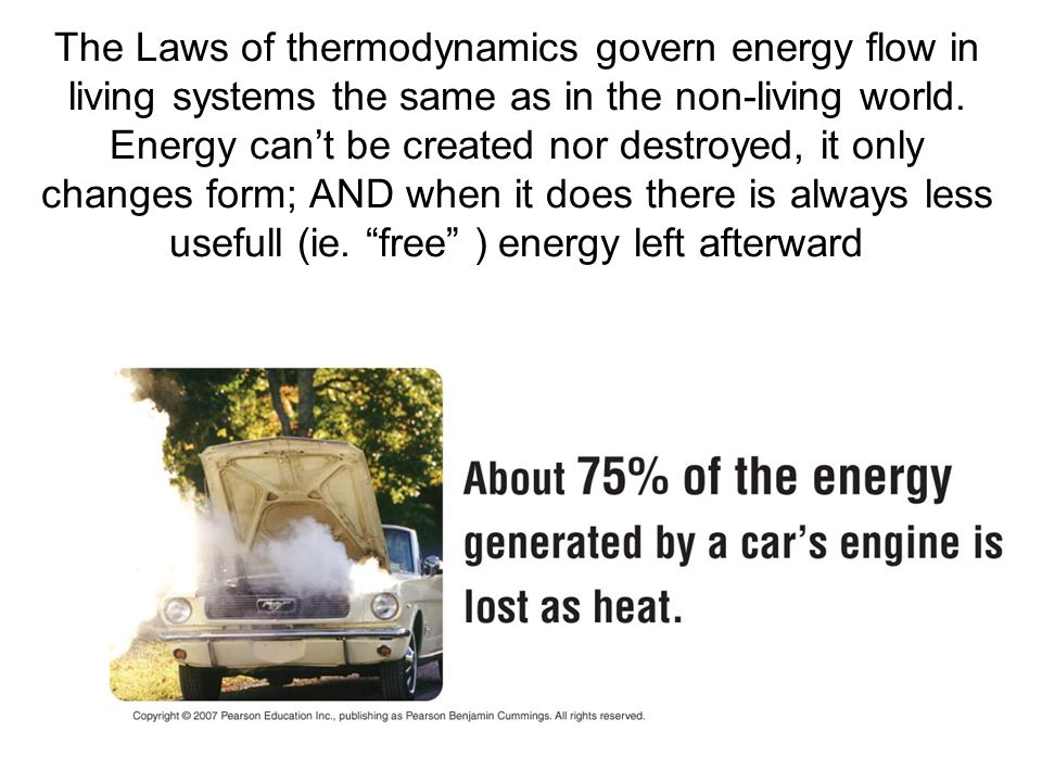 The Laws of thermodynamics govern energy flow in living systems the same as in the non-living world.