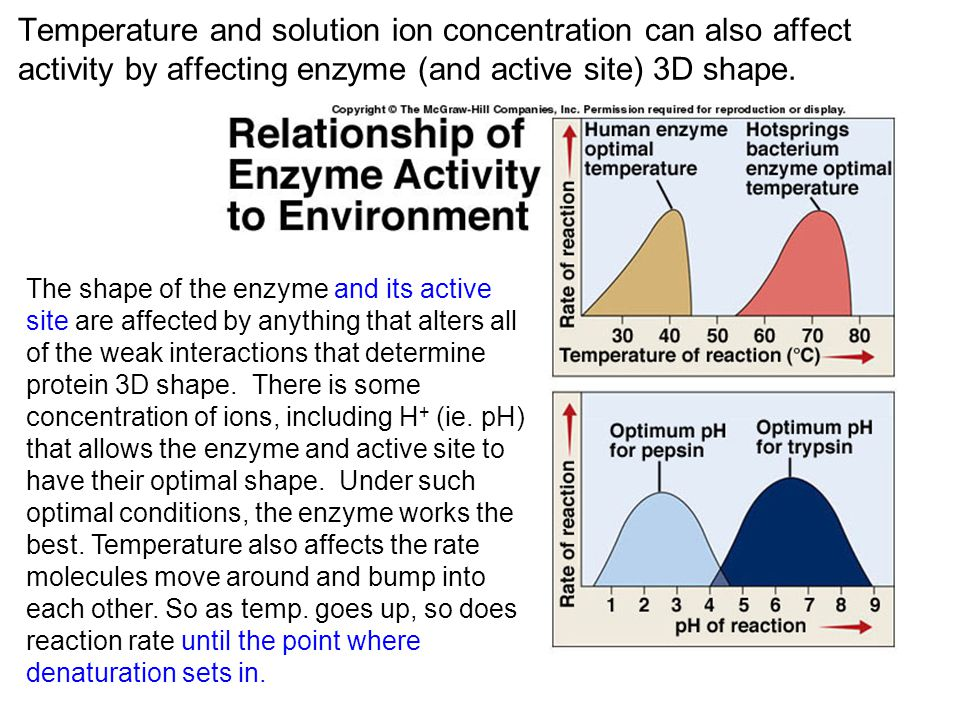 Temperature and solution ion concentration can also affect activity by affecting enzyme (and active site) 3D shape.