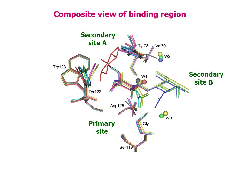 Composite view of binding region