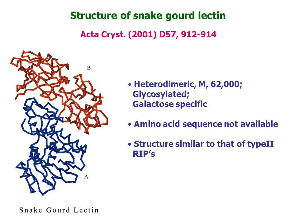 Structure of snake gourd lectin