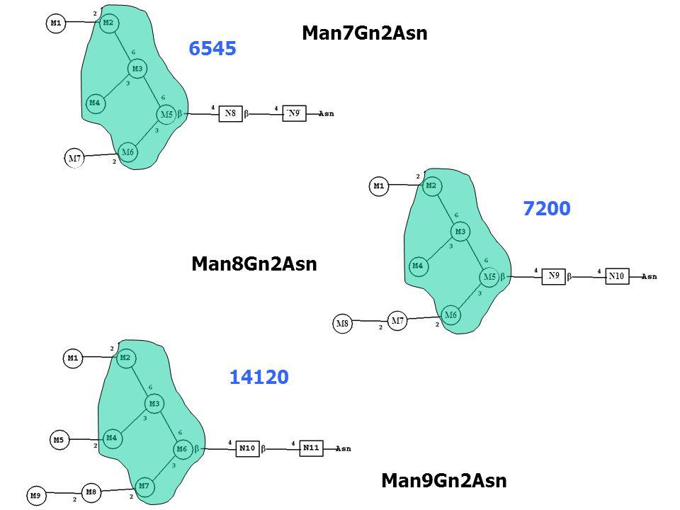 Man7Gn2Asn 6545 7200 Man8Gn2Asn 14120 Man9Gn2Asn M5 M6 M7 N8 N9 N8 M5