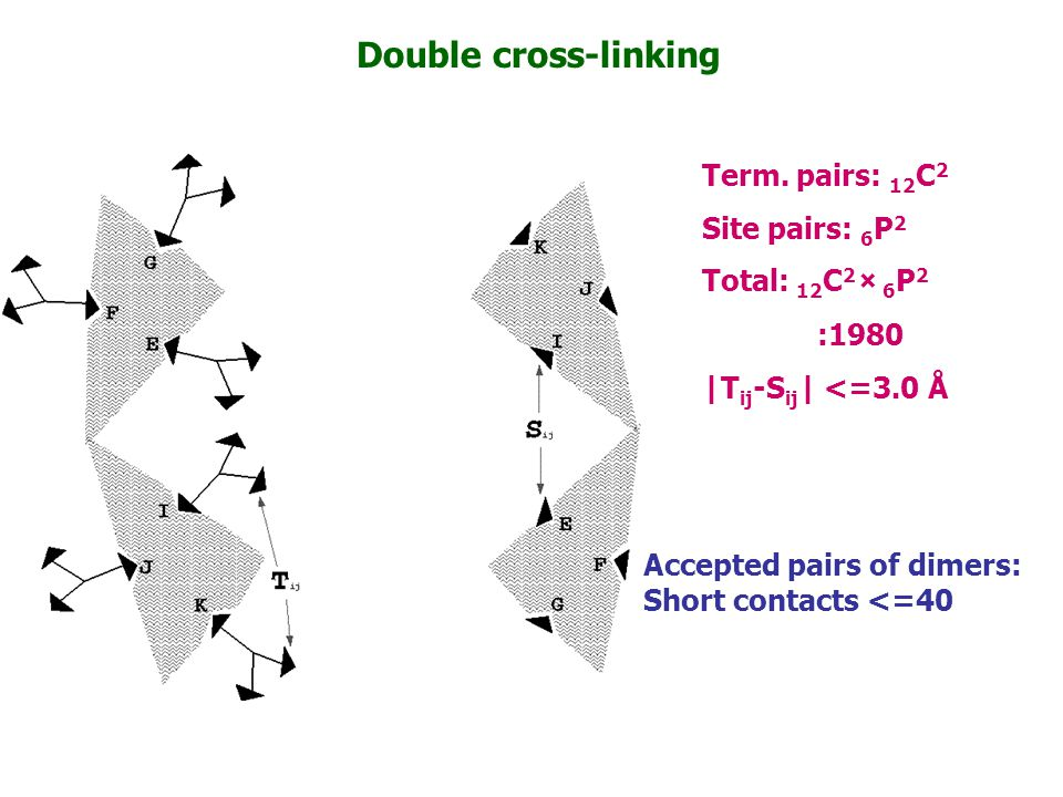 Double cross-linking Term. pairs: 12C2 Site pairs: 6P2