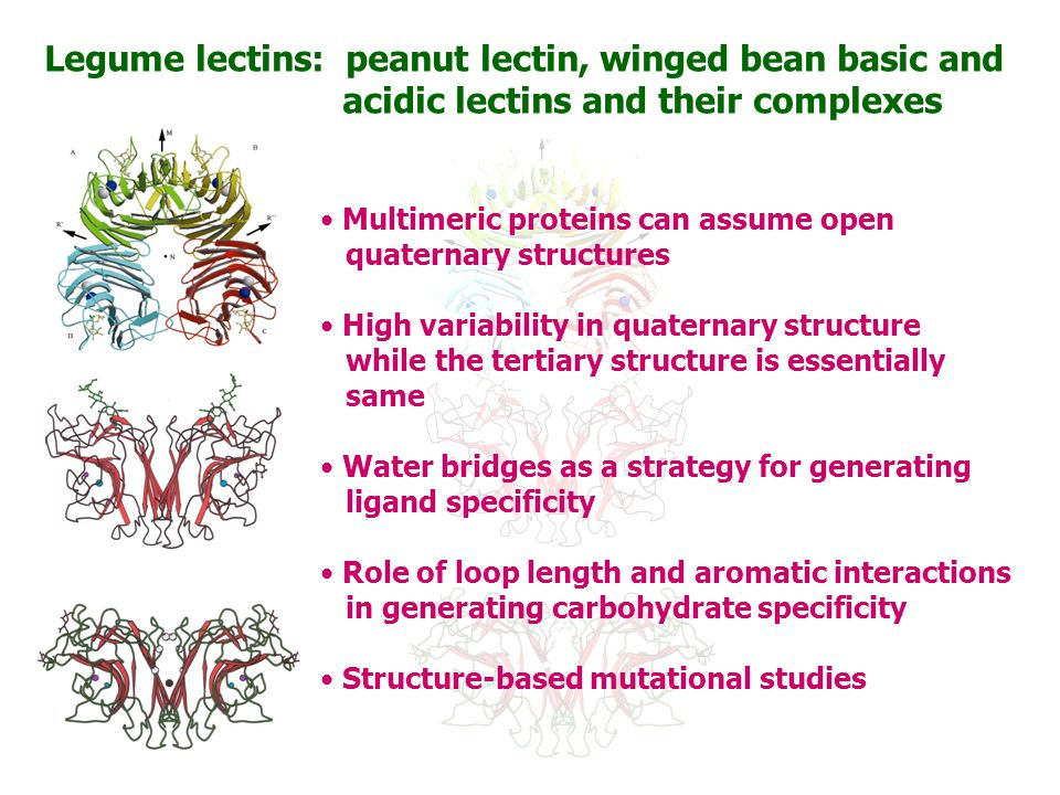 Legume lectins: peanut lectin, winged bean basic and