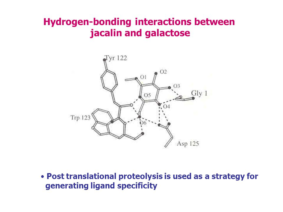 Hydrogen-bonding interactions between