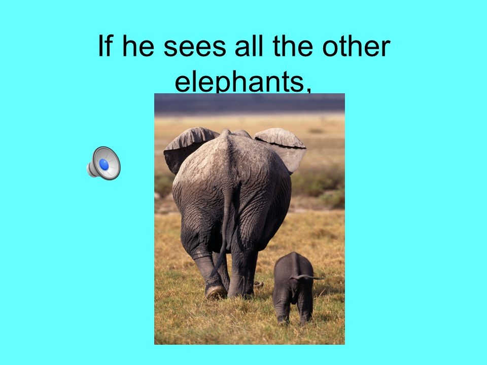 If he sees all the other elephants,