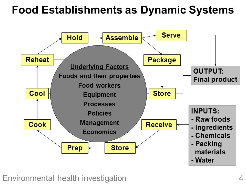 Food Establishments as Dynamic Systems