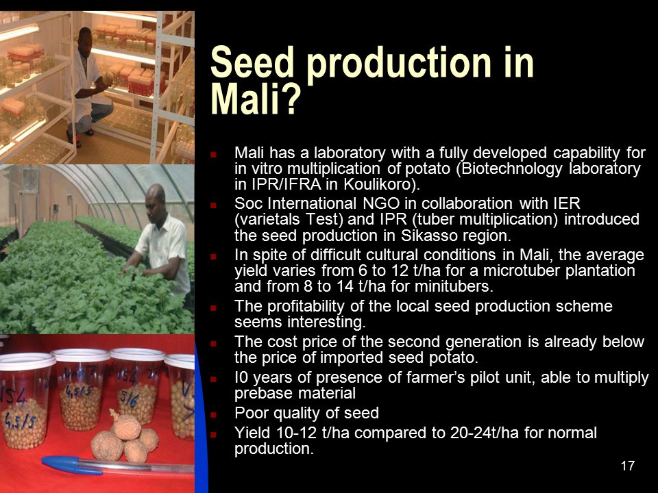 Seed production in Mali